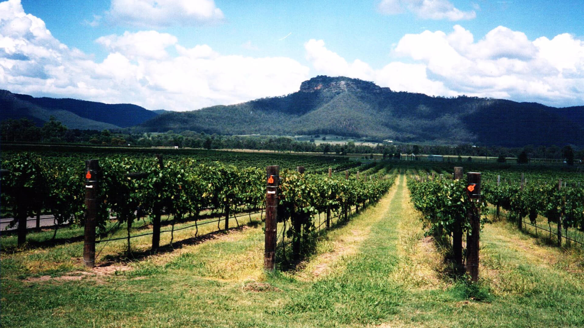 Hunter Valley scenery