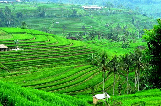"""Ancient Temples And Jatiluwih Rice Terrace Private Tour"""""""